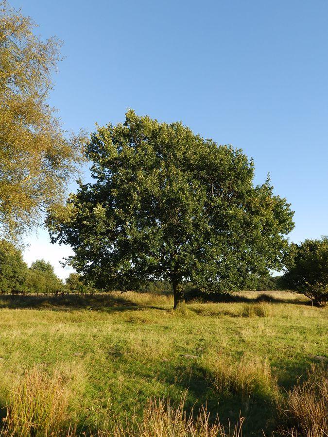 week-39-eikeboom